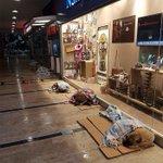 大吹雪の日、ショッピングモール内でゆったりとくつろぐ野良犬や猫が可愛すぎると話題