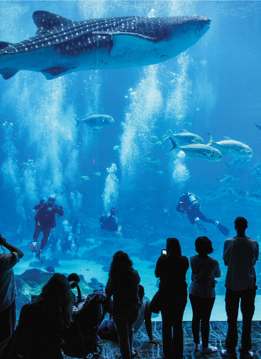 San Diego Zoo On Twitter Veterans With Ptsd Find Relief Swimming W