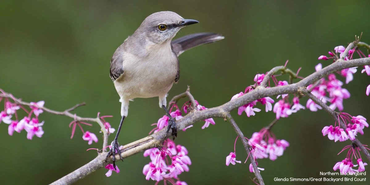 #WhenSpringArrives, it will be a great time to plant native plants and bring birds to your yard.  https://www. audubon.org/plantsforbirds  &nbsp;  <br>http://pic.twitter.com/DEjMJBs7Xb