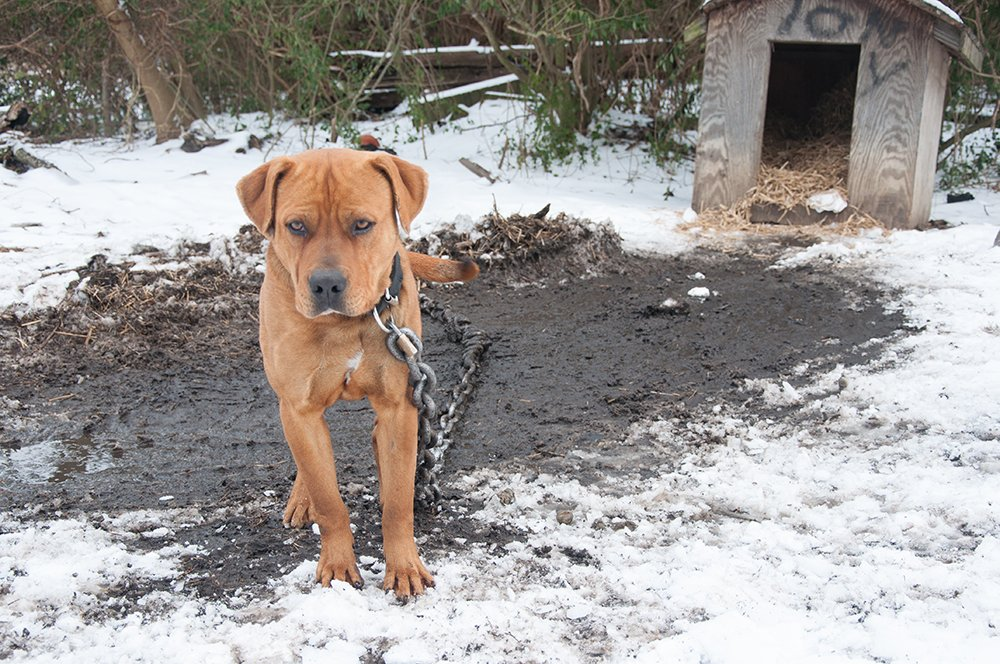 He is looking forward to #WhenSpringArrives. Until then, be an angel &amp; help him get proper shelter.  http:// peta.vg/1vcv  &nbsp;  <br>http://pic.twitter.com/xPaWpUxL8e