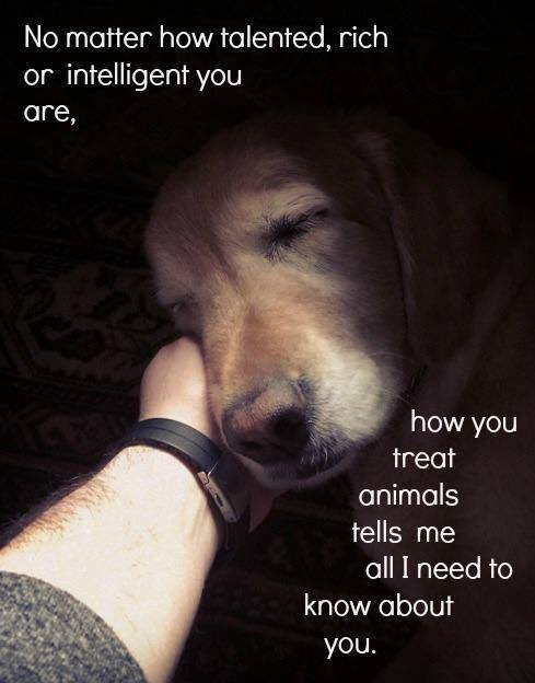 Would you retweet if you agree with my friend Billy?   http:// bellasbigadventure.com  &nbsp;   #dogs #puppy #puppies #dog #travel #America #Adventure #Bella<br>http://pic.twitter.com/FtoBfEvptv