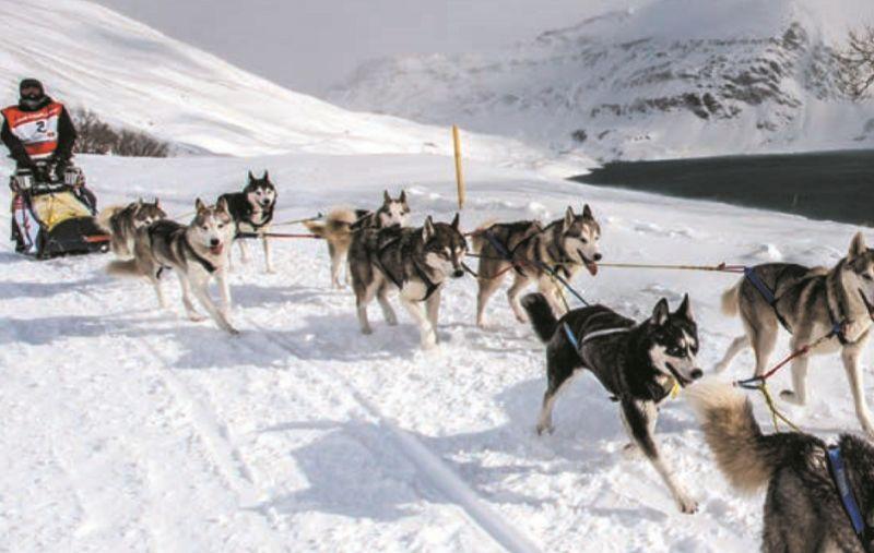 La #Grande #Odyssée Savoie Mont-Blanc : une aventure en #chiens de #traineau de 11 jours !  http:// buff.ly/2iFQuQC  &nbsp;  <br>http://pic.twitter.com/FWNzALcqgu