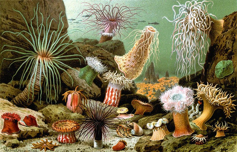 Here's wishing everyone, even all my sea anemones a happy new year! https://t.co/V69HQzZBwd
