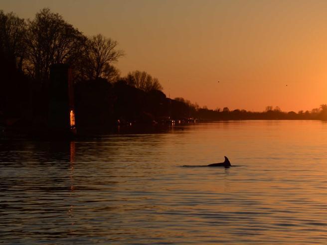 Pisa: delfino si perde nell'Arno Salvato, lo chiamano Capodanno https://t.co/I4gUlgpADZ