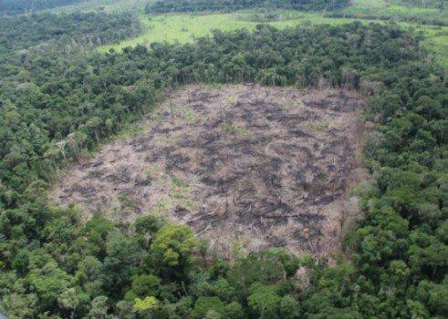 Ex-gerente do Ibama dava 'cobertura' ao maior desmatador da Amazônia, diz Procuradoria https://t.co/Ee0dm9aQzE
