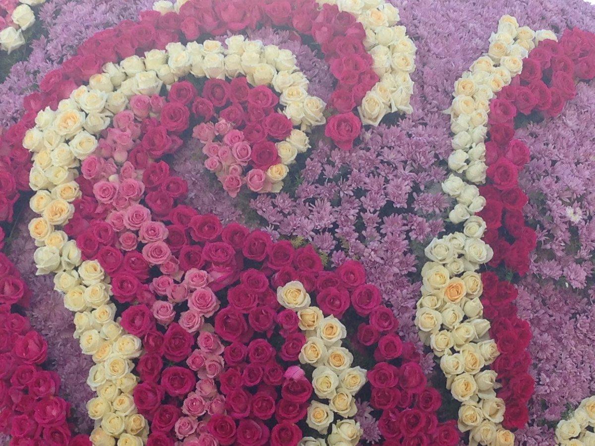 Rose Parade  - Page 3 C1HYuRPUoAAQeTb