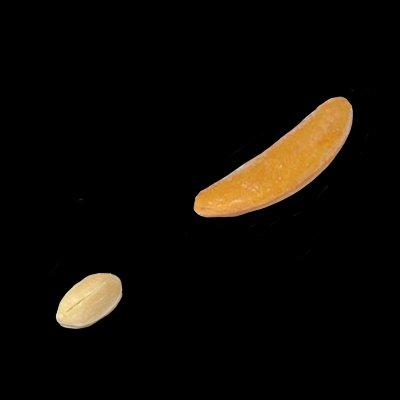 月と金星こんなかんじなってる https://t.co/CrltBxSIuU