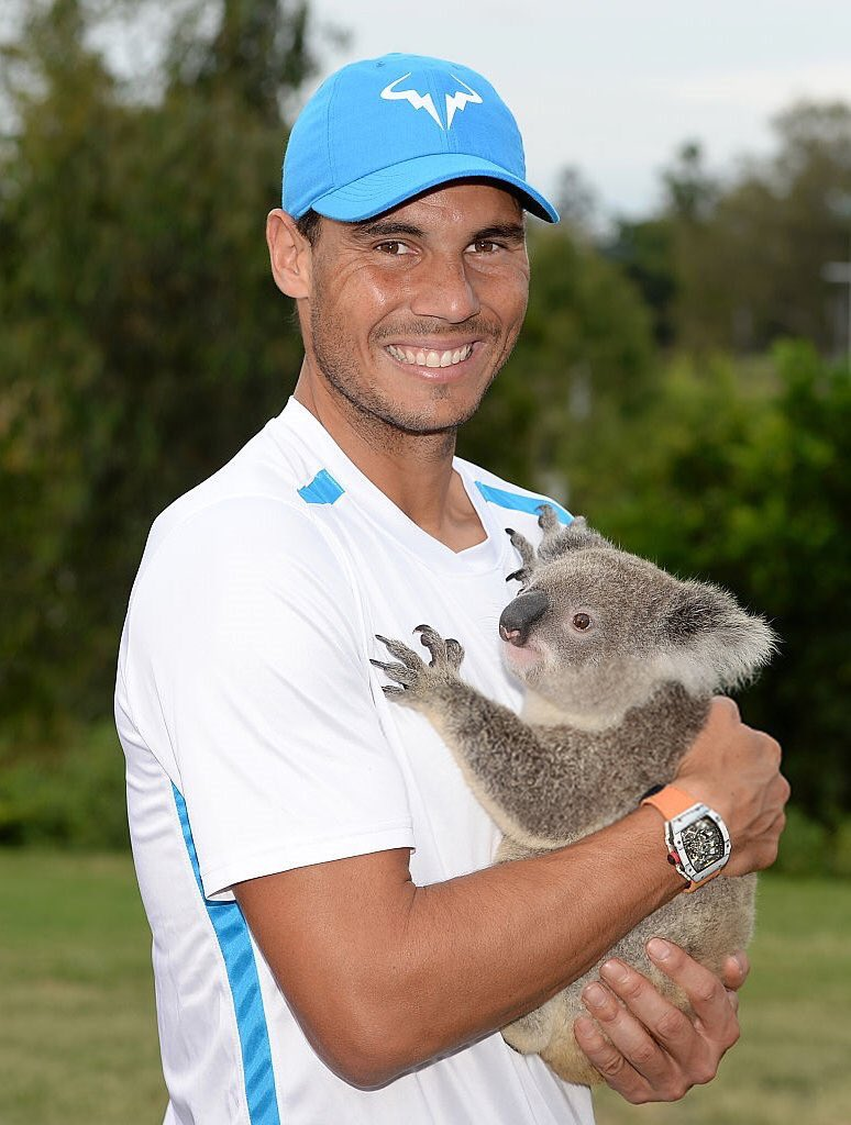 Andy murray twitter - Andreapetkovic Kryptobanana Wait How Did Nadal Get The Baby Koala And Murray S Holding Mr Sleepy Pudge Or Is Andy Murray Really Small Pic Twitter Com