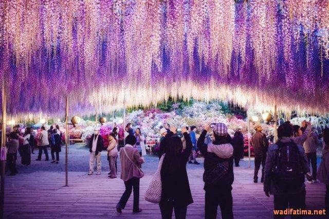 حديقة زهرة الحب في اليابان C1QsdpUXcAAGTDw