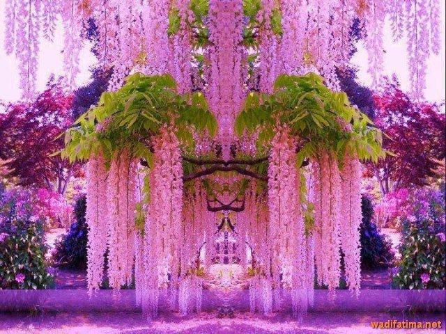حديقة زهرة الحب في اليابان C1Qse4TWEAADXvo