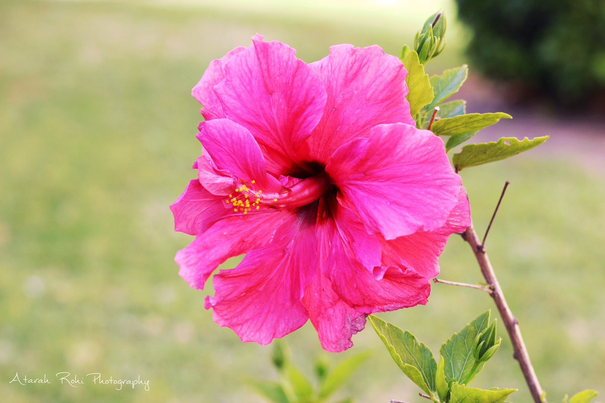 Atarah Rohi On Twitter Flowers In Bloom Capetown Photography