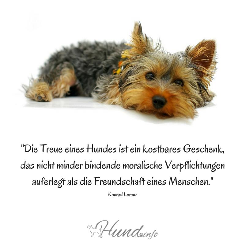 Hundinfo Twitterissä Wie Wahr Hundesprüche Treue