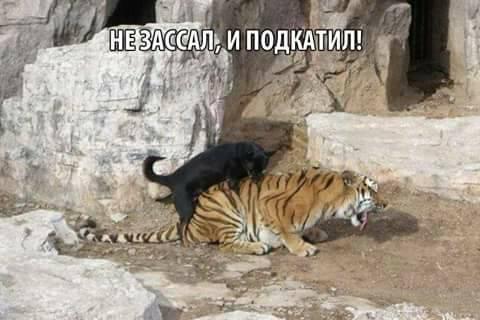 На прошлой неделе в Украине зафиксировано 6 смертей от гриппа, - Минздрав - Цензор.НЕТ 4584