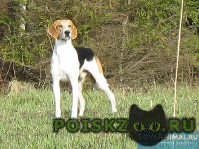 Охотничьи собаки реферат