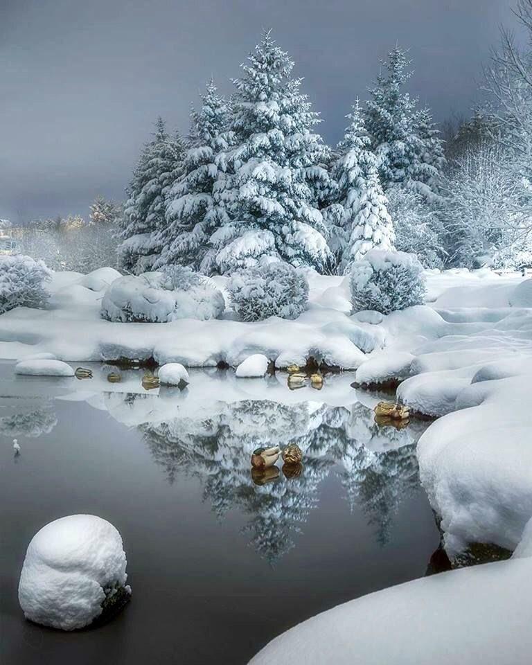 ~Winter in fullness ... ❄️❈❄️❈❄️