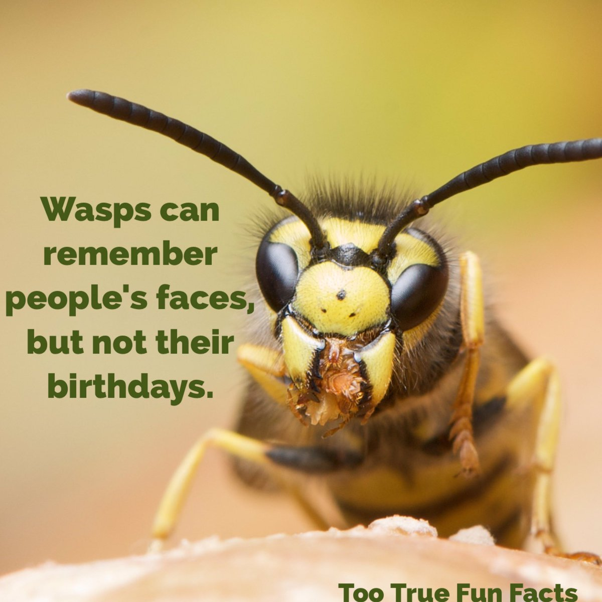 Interesting facts about insects. Amazing insects