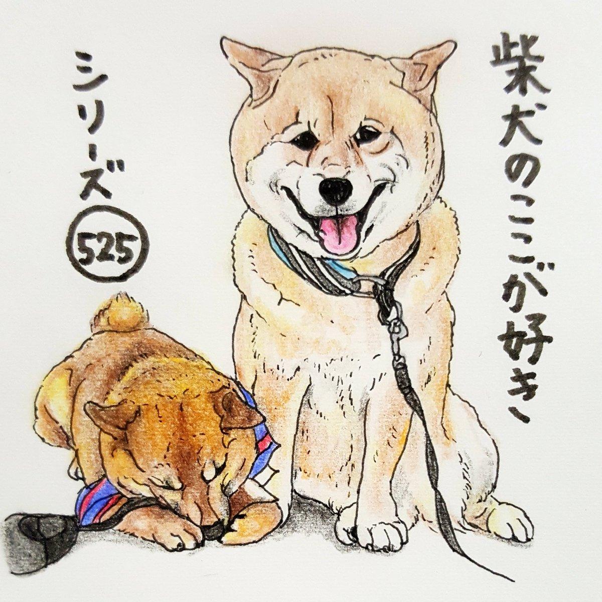 柴犬のここが好きシリーズ!】柴犬の好きな所を描いたイラストが、柴犬