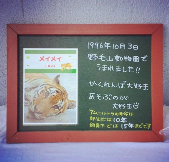 メイメイが亡くなりました@野毛山動物園 https://t.co/hYJUPMbTU4 https://t.co/ZValKe1LCb
