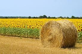 Suite export agricoles #France ont lgtemps progressé après #sanctions contre #Russie Baisse ensuite a raisons autres  http:// lekiosque.finances.gouv.fr/fichiers/etude s/thematiques/3T2016.pdf &nbsp; … <br>http://pic.twitter.com/OKx4C1FIxx