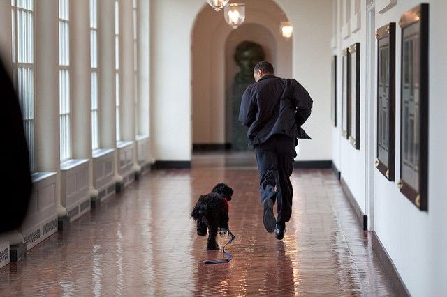 "Denier sprint d&#39;#Obama avec son chien à la maison Blanche...   ""Farewell First Doggos Bo and Sunny Obama"" <br>http://pic.twitter.com/JLCNH6hnnk"