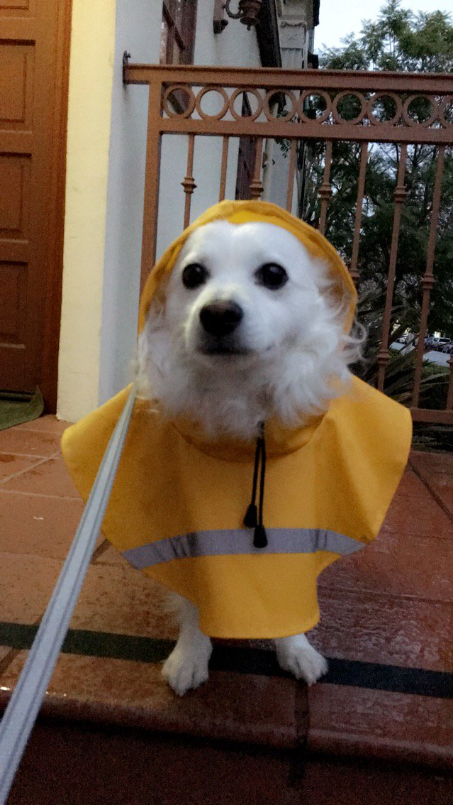 I love that #LARain is trending on twitter. This is big news around these parts. My dogs even got raincoats. https://t.co/nqcwdCtAcR