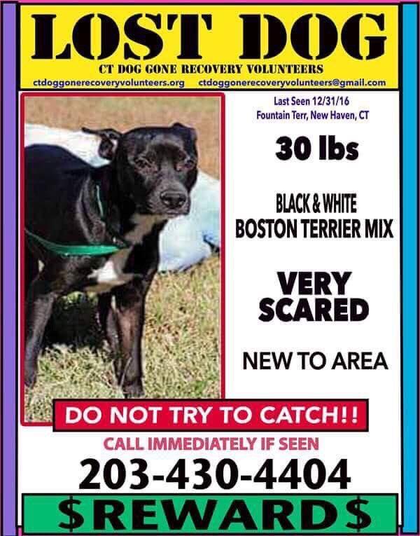Help Find Waylon, last seen on Fountain Terr in New Haven. https://t.co/UKdKG19bvg
