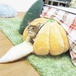 こたつに直結した「みかんハウス」で暖を取る猫が可愛すぎるwww