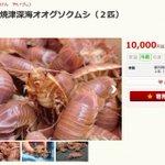 静岡県焼津市にふるさと納税→生きたままのオオグソクムシが送られてくるらしい!