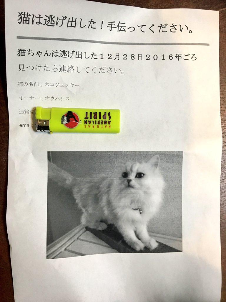 うちに入ってたチラシ。手伝うよー!と固く誓いましたかわええ、見つけたらお礼に少し触らせてくらさい、と思いました。日本語苦手なのに頑張った飼い主さんに泣けてしまったのだけれども。もし渋谷駅まわりにいたら教えてくらさい。見つけに行く。 https://t.co/CtL0zdElYJ