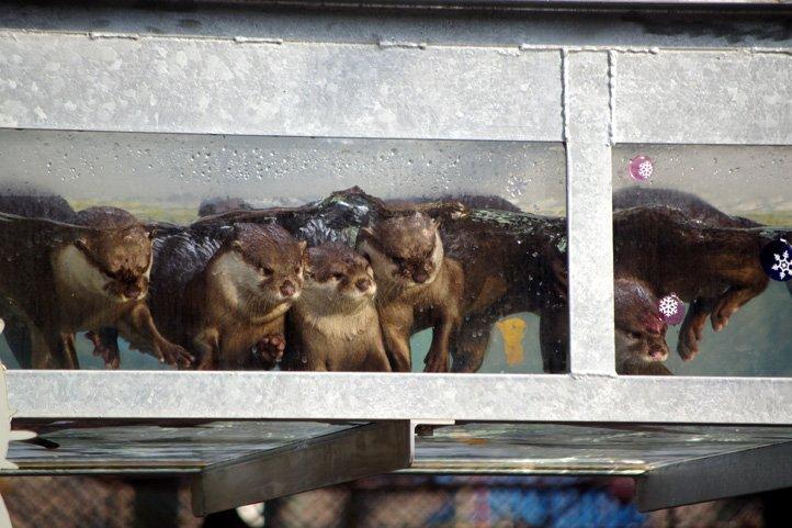 ヘッダー画像を池田動物園コツメカワウソ女子組の写真にしてみた。なかなか気に入っております。 https://t.co/dlzHuaZexf