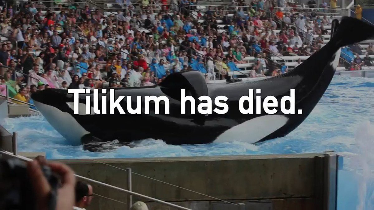 Tilikum could have had freedom, but #SeaWorld robbed him of that too. #Blackfish #RIPTilikum https://t.co/nmPuFEIqb0
