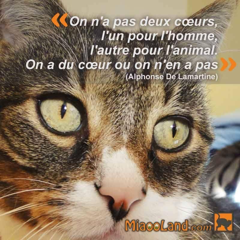 … @AUCHAN_France #Auchan aussi? Ceux qui ne respectent pas les animaux sont les mêmes que ceux qui ne respectent pas les  @VeganFolies<br>http://pic.twitter.com/nrFFci0f95