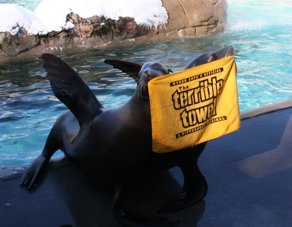 Lets go @steelers! #HereWeGo #BurghProud #zooforall https://t.co/K2XRyA998g