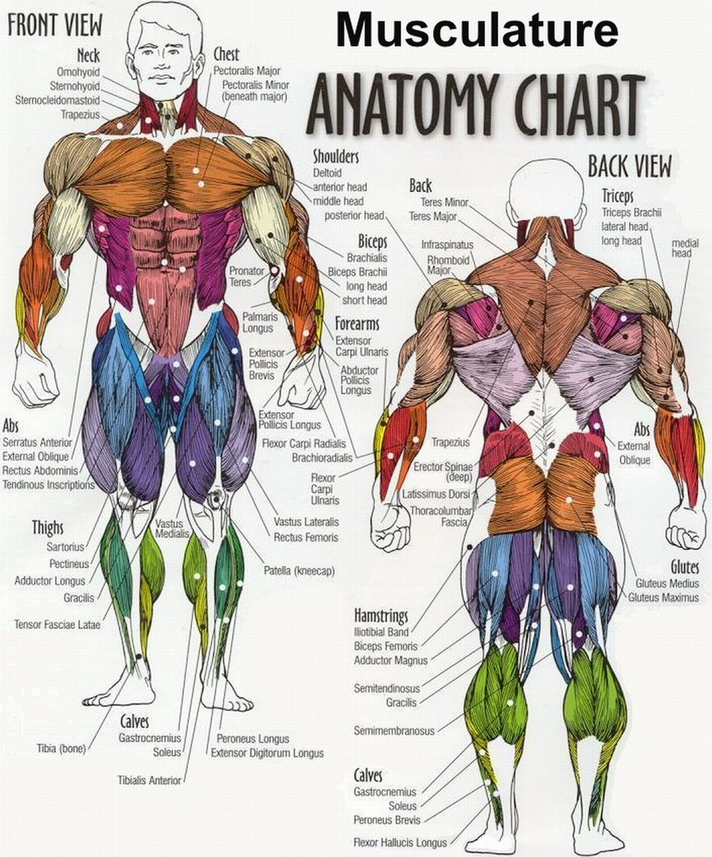 T Nation On Twitter New Ways To Hit Every Muscle In Your Body