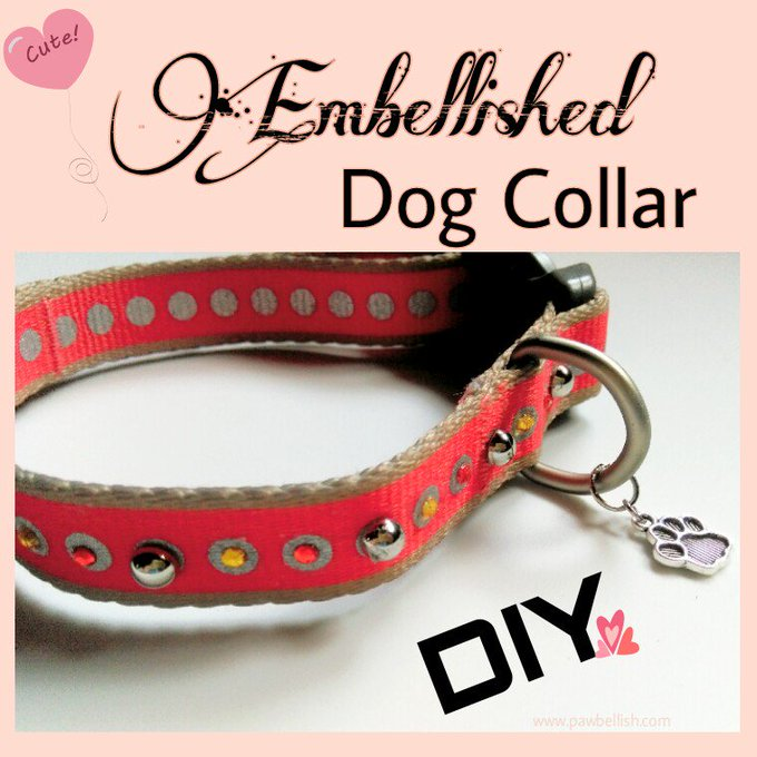 DIY Embellished Dog Collar