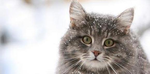 Kışın soğuk havada kediler 6, köpekler 17 saat aç kalırsa donarak ölüy...