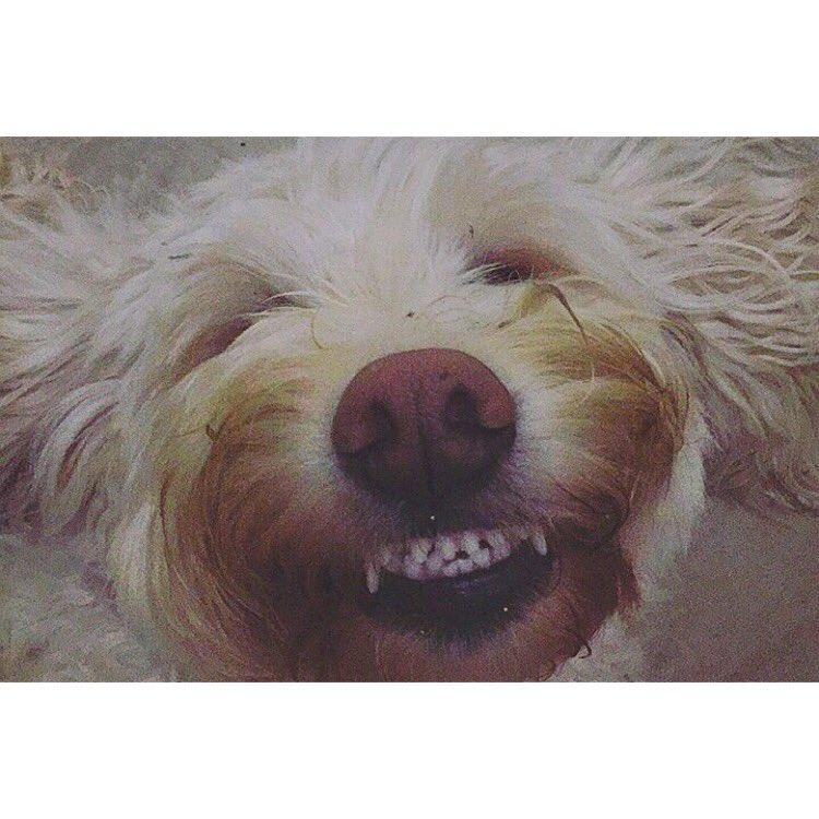 Smile, it's the weekend https://t.co/Rmjdi0miBU https://t.co/HPes6oojha