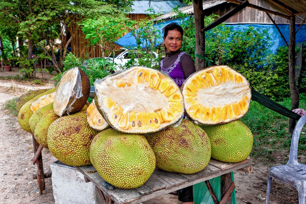 jackfruit as oil 2 essay Method before touching the raw jackfruit, spread 2-3 news papers, grease both your hands with generous sesame oil or use gloves grease the knife too with oil.