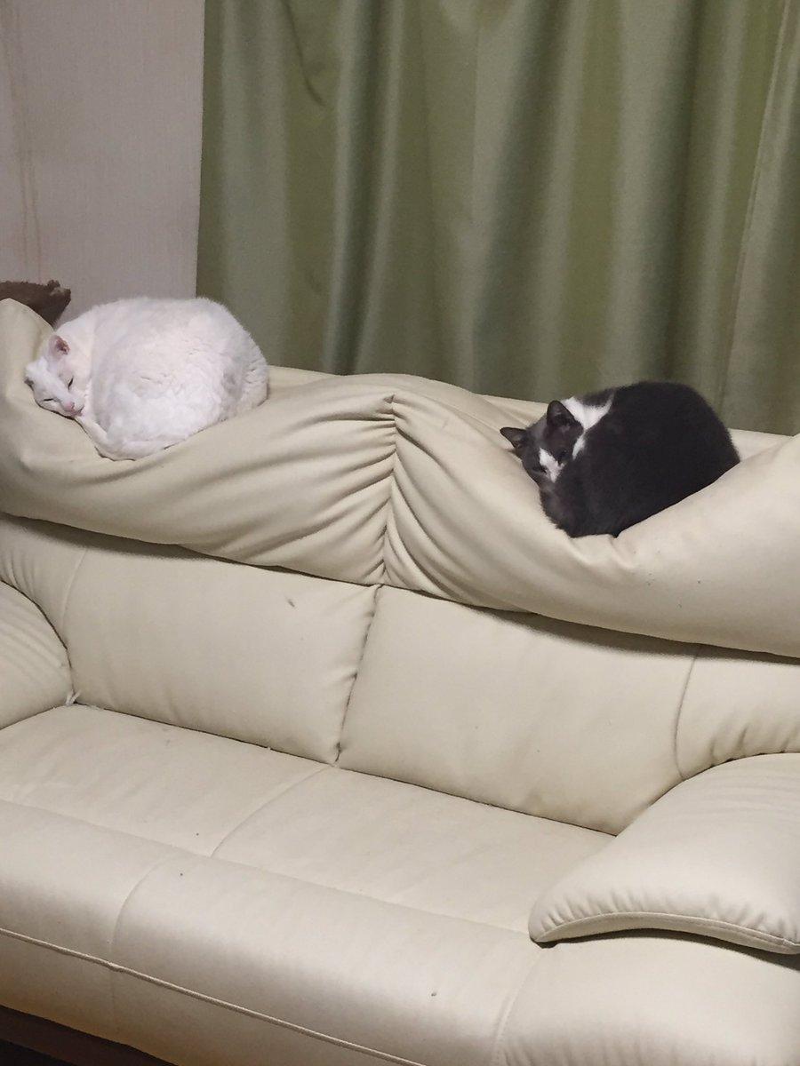デコボコに凹んだソファー、まさかの原因が発覚www