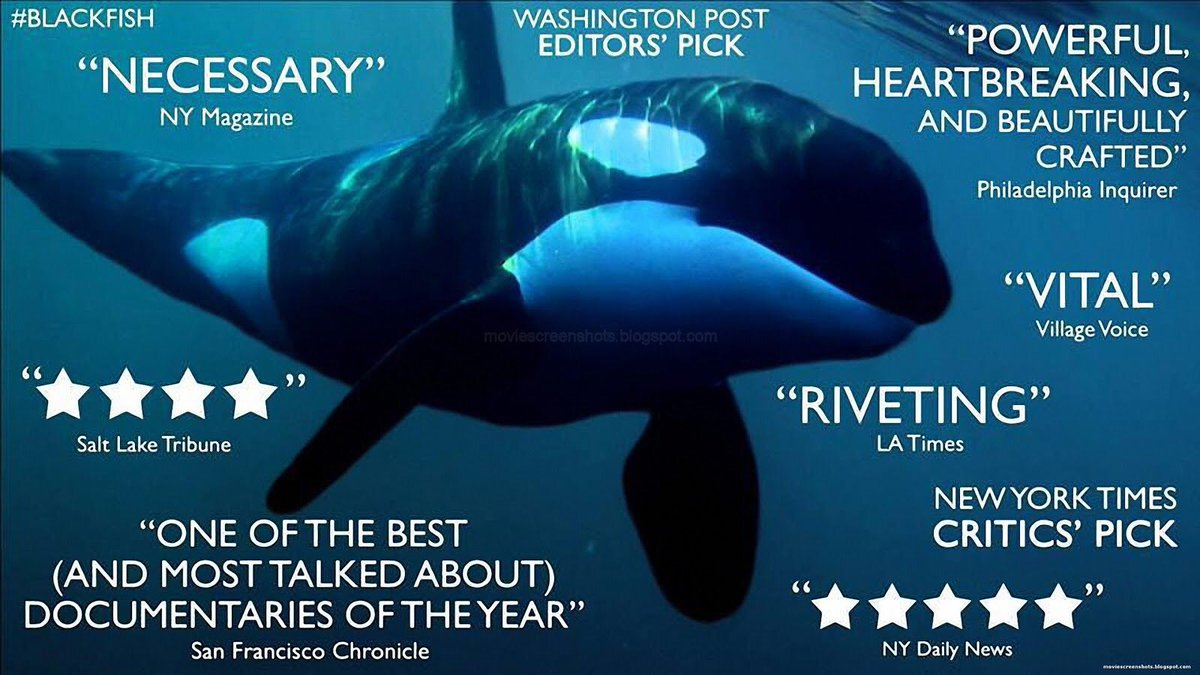 RETWEET if u want @CNN to re-air #Blackfish to honor #Tilikum & remind the world why we must #EmptyTheTanks https://t.co/Aztj7BY4m5