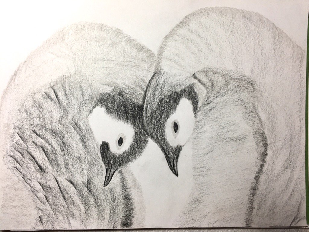 Pencilled Penguins art by me :) https://t.co/HY85ykOy4O
