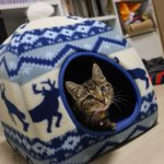 Image for the Tweet beginning: 呼んだ? Do you Call me ? #猫