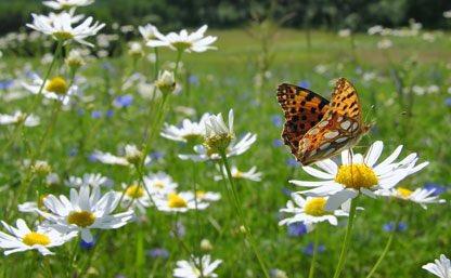 Agence #biodiversité prête à fonctionner, compo CA publiée ce matin au JO. Initiative unique au monde qui va servir d&#39;exemple #COP21 #Climat <br>http://pic.twitter.com/Ijn14WqD9C