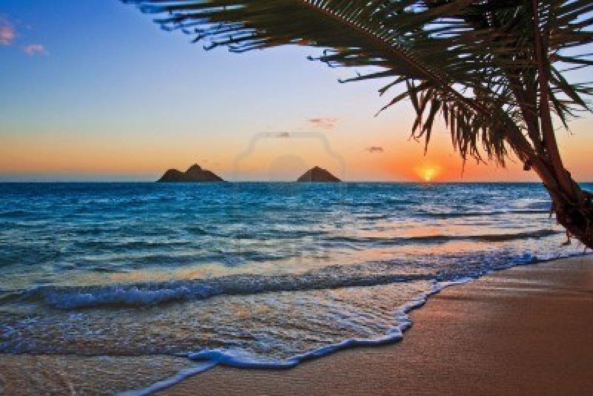 aloha hawaii essay Aloha hawaii tours shares aloha and hawaii's hidden secrets visit pearl harbor, snorkel on the north shore, discover history at iolani palace or see it all on a circle island tour.