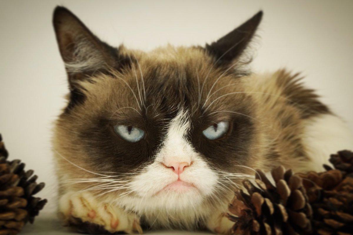 Grumpy Cat Grumpy Cat Video