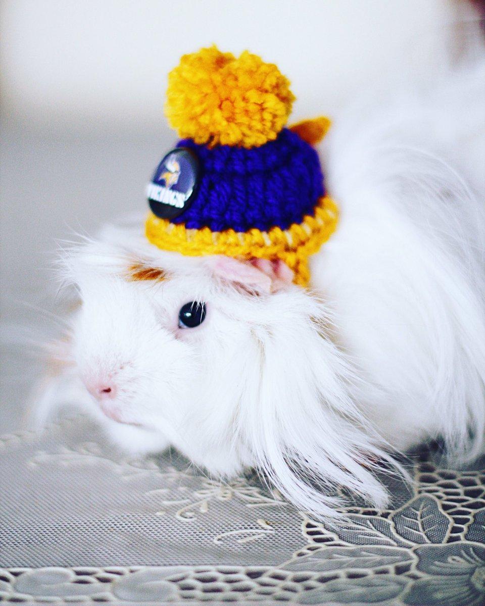 Dekigusu is prepared for winter ❄️ #guineapig #cute #lovely https://t.co/tVMiXsdMmW