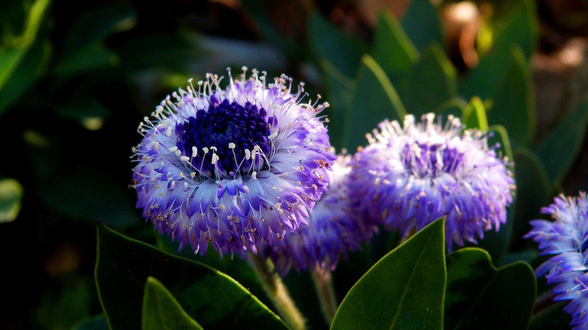Fleur on for Frangipanier jardiland