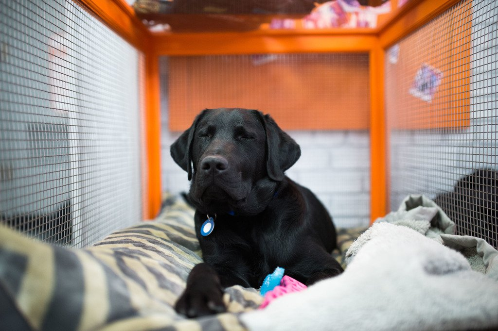 Stayed up too late watching the #GoldenGlobes. #TODAYPuppy