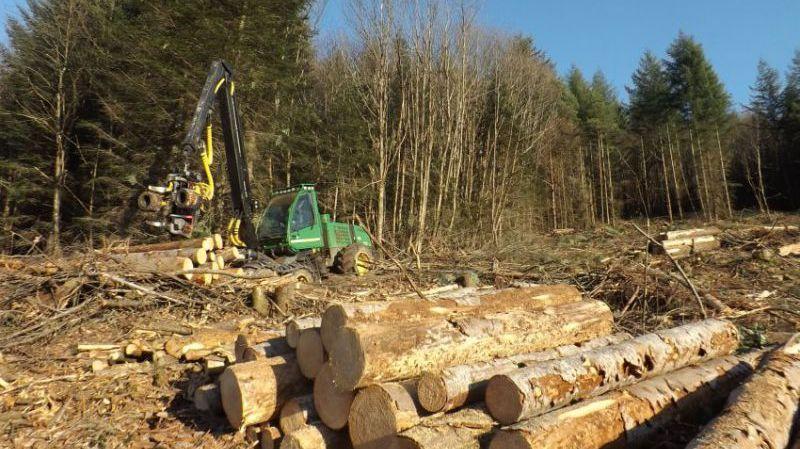 #Forêt: le sapin de Vancouver n&#39;a pas résisté à la sécheresse en Corrèze, via @francebleu  https://www. francebleu.fr/infos/climat-e nvironnement/le-sapin-de-vancouver-n-pas-resiste-la-secheresse-en-correze-1483546818 &nbsp; … <br>http://pic.twitter.com/kr7P95EqED