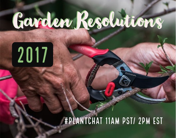 Thumbnail for 1.9.17 #plantchat Garden Resolutions